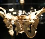 Exposición sobre los Yacimientos de la Sierra de Atapuerca