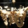 Exposición sobre los Yacimientos de la Sierra de Atapuerca en Museo de la Evolución Humana (MEH), Burgos