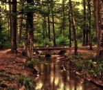 """Itinerario Ambiental: """"Naturaleza y Bienestar"""""""