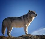 """Itinerario Ambiental: """" Caminando con Lobos"""""""